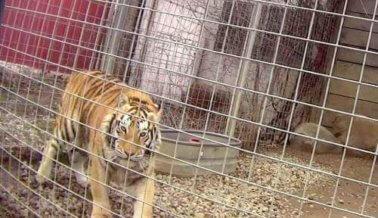 Dentro de un Seudosantuario: Un Exposé de PETA