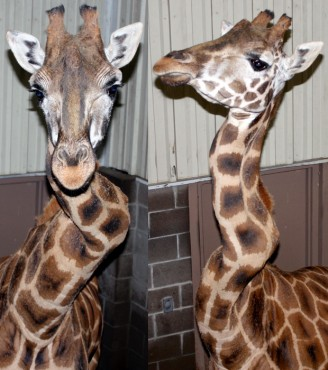 are zoos cruel to wild animals