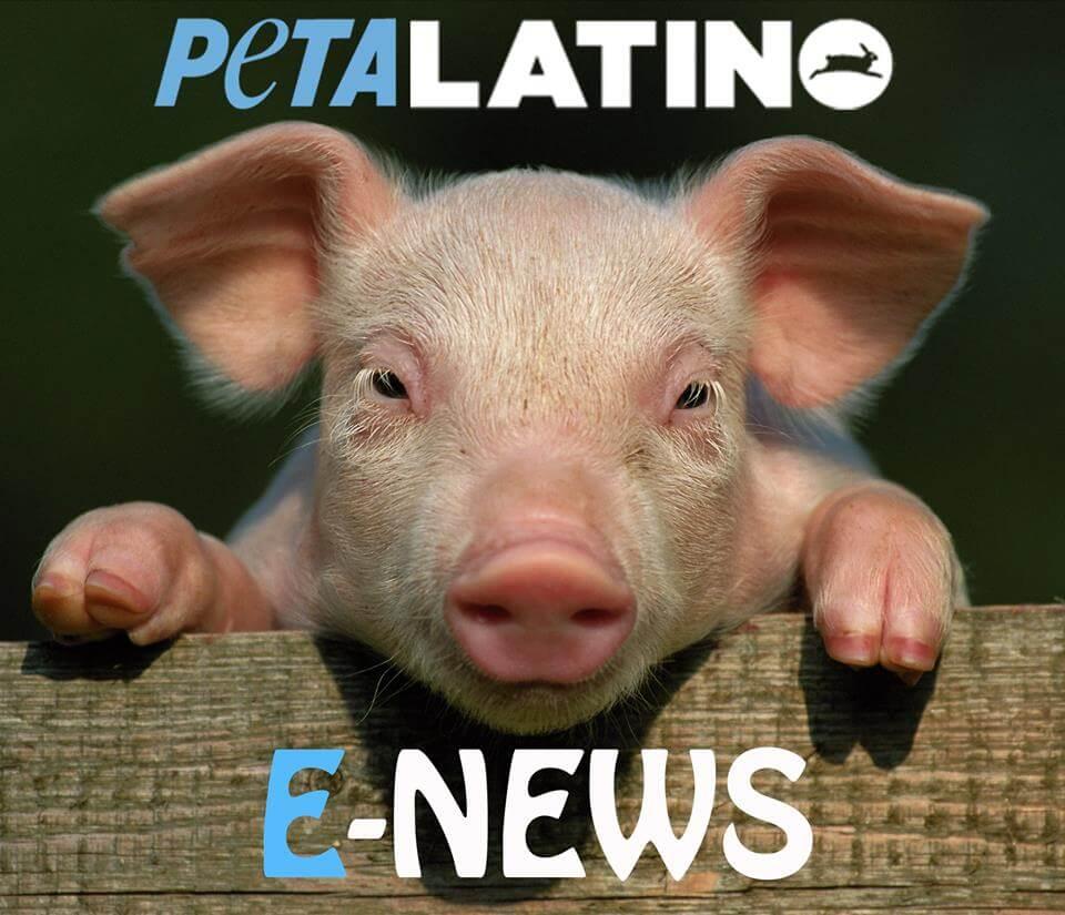 e-news piggy