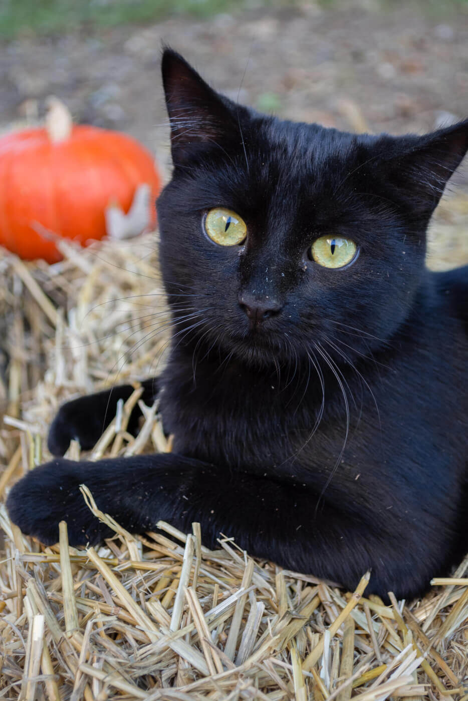 Keep Your Animals Safe And Happy This Halloween Blog Peta Latino
