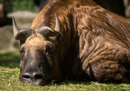 Victory! Another City Bans Bullfights