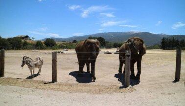 Monterey Zoo: Estos Registros con Información Confidencial no Mienten, Pero el USDA Aparentemente sí