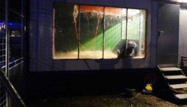 ¡Victoria! El último gran simio en un circo alemán se dirige a un santuario