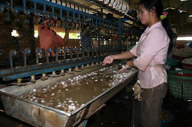 silk farmer