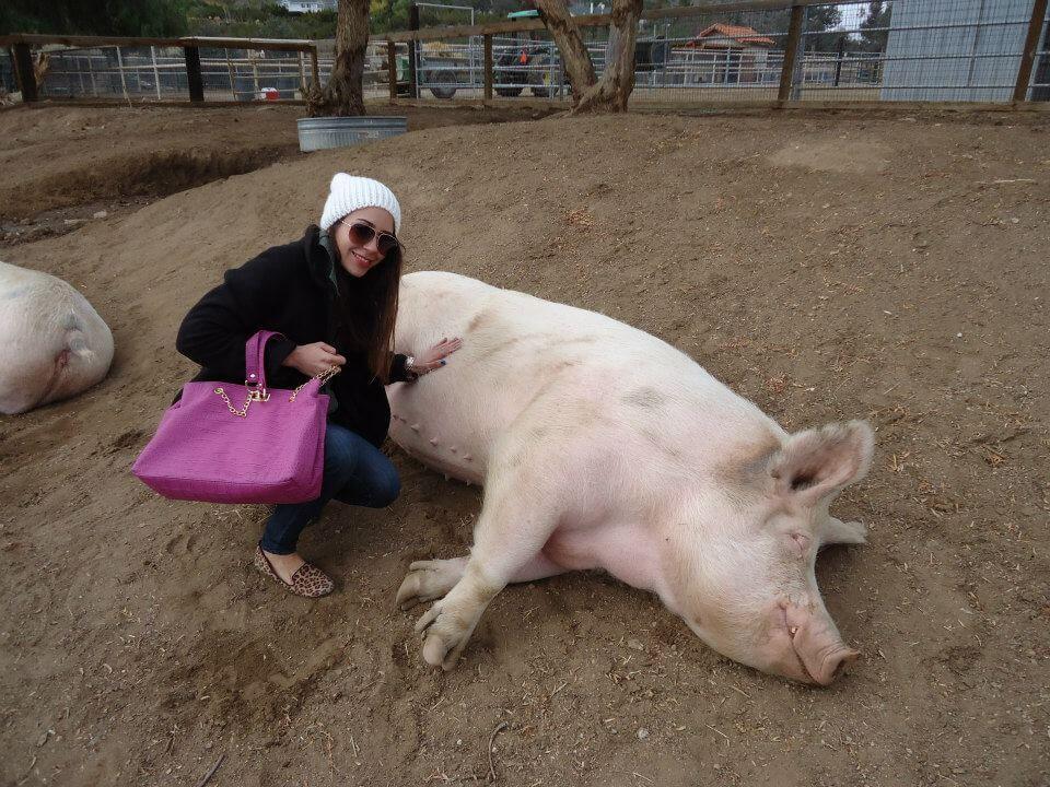 Annie-Pig