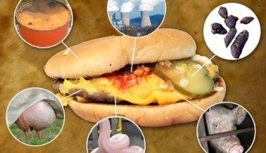 ¡Asqueroso! 7 cosas que realmente se hallan en la comida