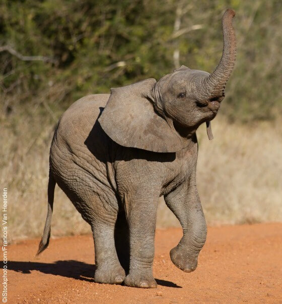 cute baby elephants born to be wild photos blog peta latino