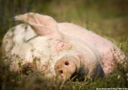 5 animales que están felices de que seas vegano