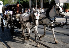 10 Reasons Why Taking a Horse-Drawn Carriage Ride Is Cruel, Not Romantic