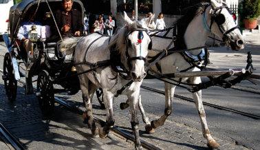 10 razones por las que pasear en un carruaje halado por caballos es cruel, no romántico
