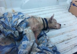 How Many Years Will This Dog Torturer Spend Behind Bars?