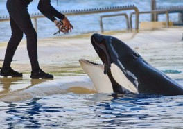 6 Ways SeaWorld Ruined Christmas