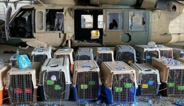 ACTUALIZACIÓN Sobre Perros en Afganistán: El Ejército de EE.UU. le Responde a PETA