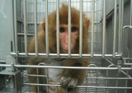How Do Monkeys End Up in Laboratories? See the Haunting Photos