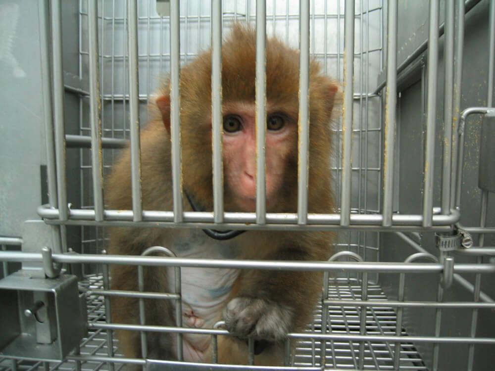 "Результат пошуку зображень за запитом ""animals are not ours experiment"""