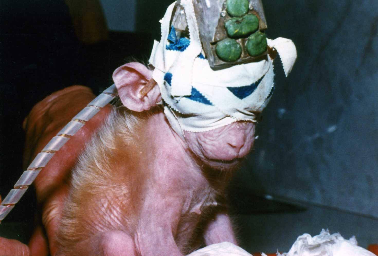 AirFrance monkey experiment