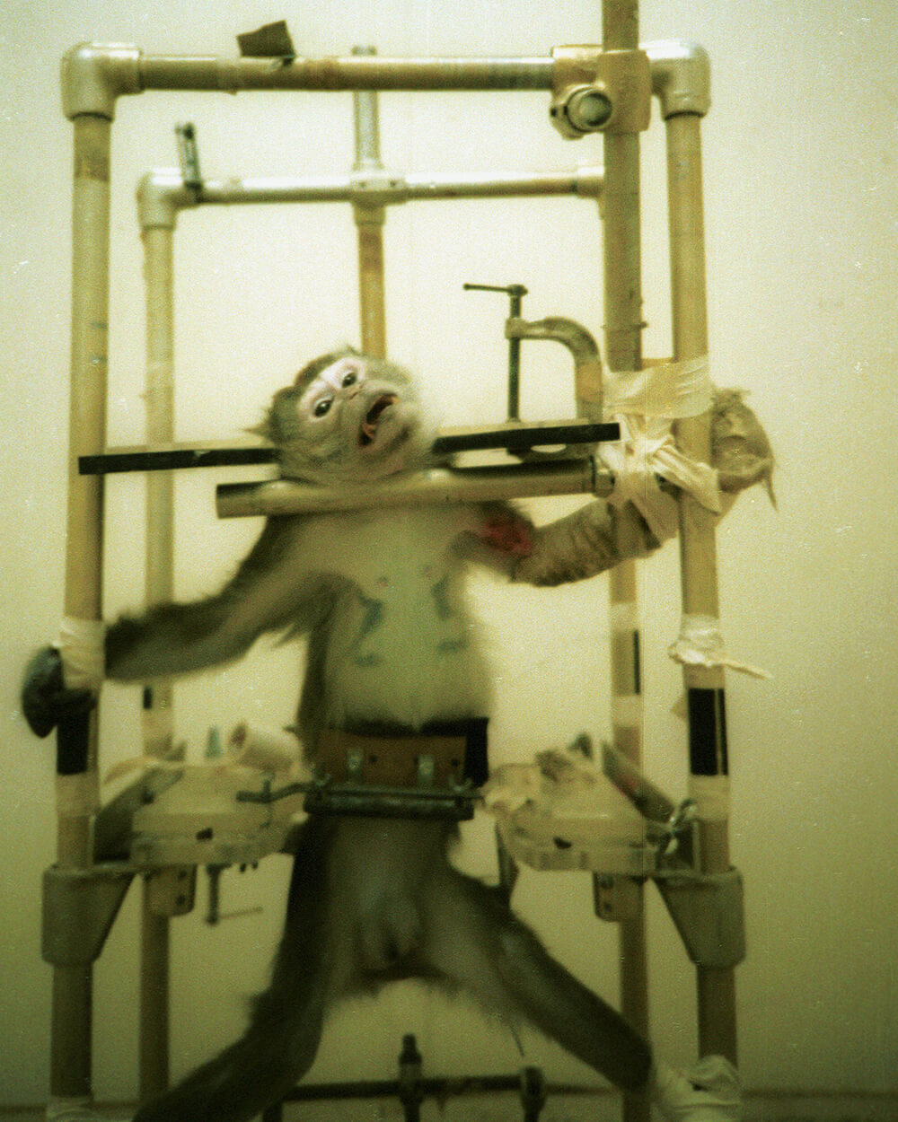 AirFrance monkey in restraints-14