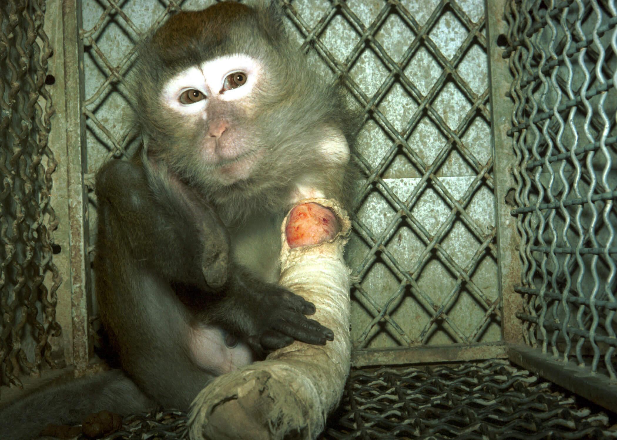 AirFrance injured monkey-19