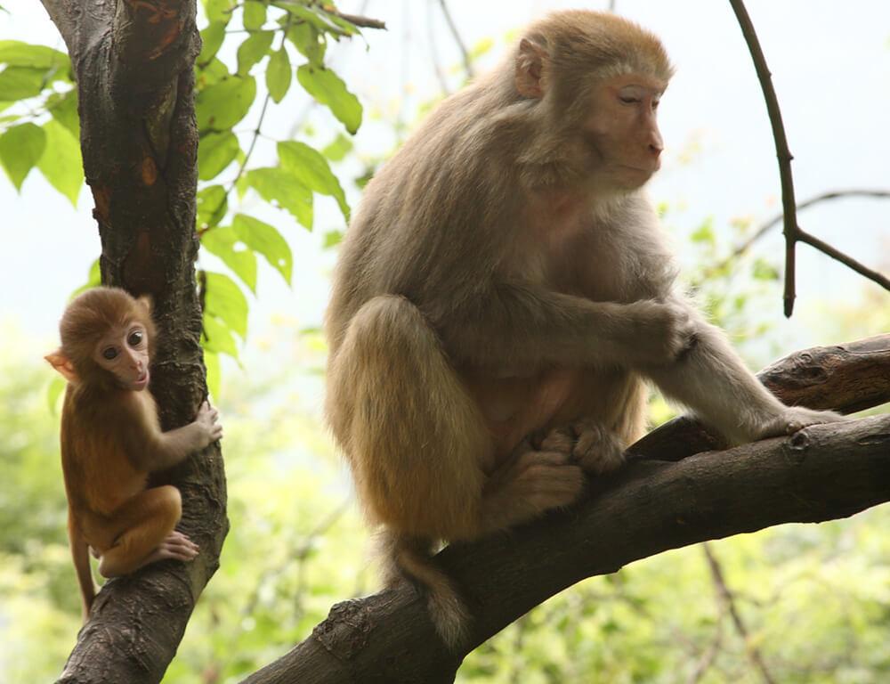 Monkeys in tree