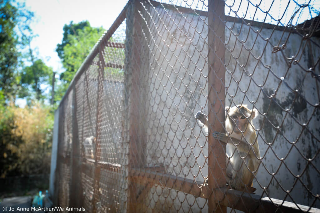 AirFrance Monkeys in cages