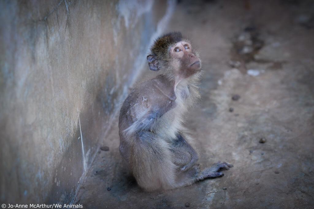 AirFrance Monkeys-4