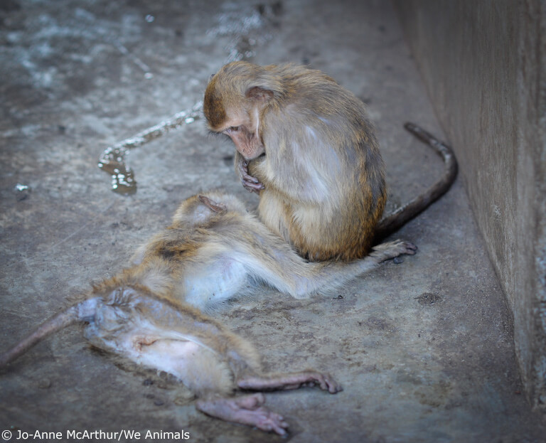 AirFrance monkeys-6
