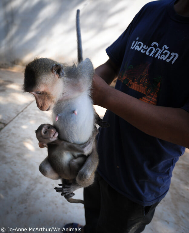 AirFrance monkey and baby-7
