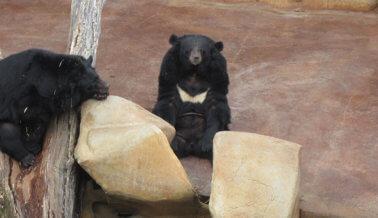 Exige a Three Bears General Store Que Mande a Los Osos a un Santuario