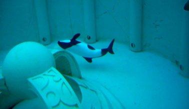 ¿Por qué pusieron a Betsy en un pequeño tanque en la parte trasera de SeaWorld de Orlando?