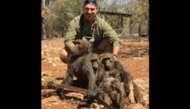 ¡Victoria! En medio de la presión por parte de PETA y otros, obligan a renunciar al asesino de babuinos