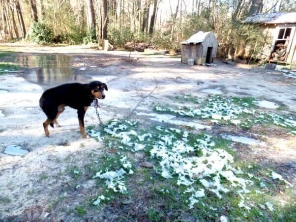 Tiene frío tu cachorro  Mantén a tu perro caliente con estos ... 6832a7f1528