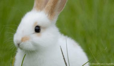 ¿Por qué PETA se siente victoriosa? Las pruebas de cosméticos en animales son una práctica que está muriendo