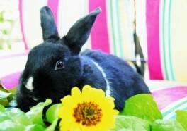 Países en todo el mundo trabajan para prohibir las pruebas de cosméticos en animales