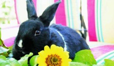 Lugares en todo el mundo trabajan para prohibir las pruebas de cosméticos en animales