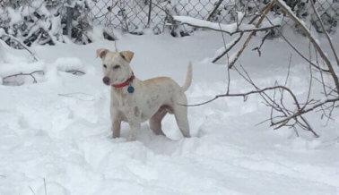 Perro rescatado luego de huracán Maria ve la nieve por primera vez