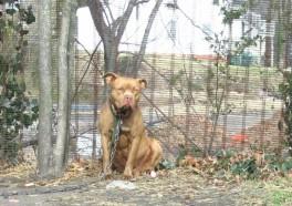 Lonely 'Backyard Dogs' Helped by PETA!