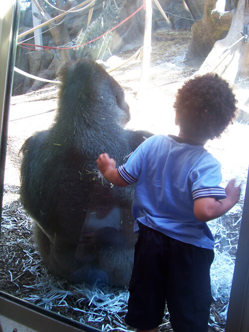 Child At Zoo