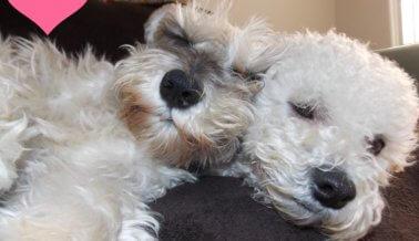 10 razones por las que mi perro es mi San Valentín, o sea, mi enamorado
