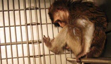 ¿El Centro de Primates de la UW Acaba de Contratar a la Dra. Muerte? PETA Revela su Turbio Pasado