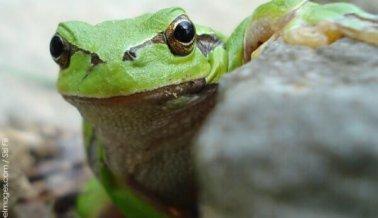 Comen a rana viva en un perturbador video