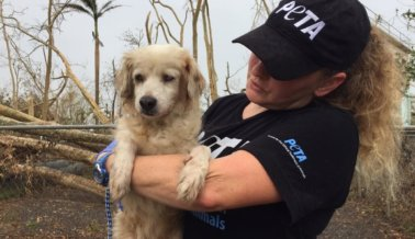 El equipo de rescate de PETA está en Puerto Rico tras huracán María