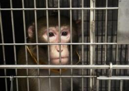 Monkeys Burned, Overdosed, and Bled to Death at Oregon Primate Center