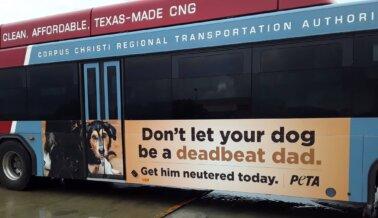 El Nuevo Anuncio Audaz de PETA 'Padre Exhausto' No Pasará Desapercibido Este Día del Padre