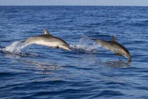 delfines saltando en el oceano