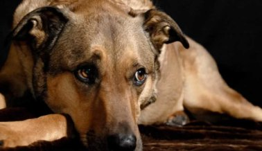 Estos perros no tienen que morir asustados y solos sobre un camino de tierra