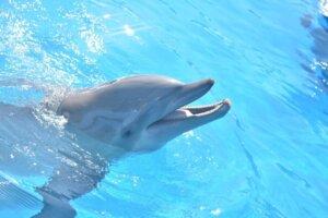 Delfin Miami Seaquarium