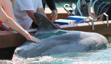 Por qué el Video del 'Beso' de un Delfín y una Entrenadora en SeaWorld te Partirá el Corazón