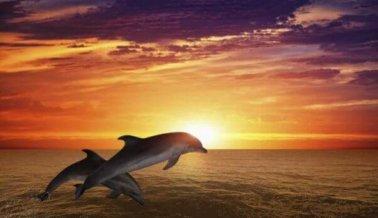 PETA dona $10.000 USD para apoyar el plan del National Aquarium para trasladar a los delfines a un santuario