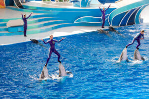 Dolphins in Seaworld preforming