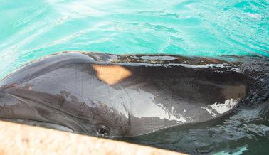 SeaWorld Pone Fin al Surf Sobre Delfines Tras Presión de PETA